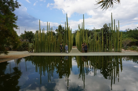 The team poses in front of the larger than life cacti living in the garden, forming almost architectural structures. Photo by Guo Jiang.
