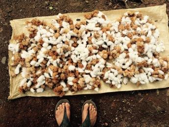 Brown and white cotton - Boruca, Costa Rica