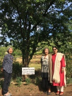 Keiko Amenomori-Schmeisser, Yoshiko Wada, and Vicky in front of the tree Yoshiko planted in 2006, now over 10 years old.